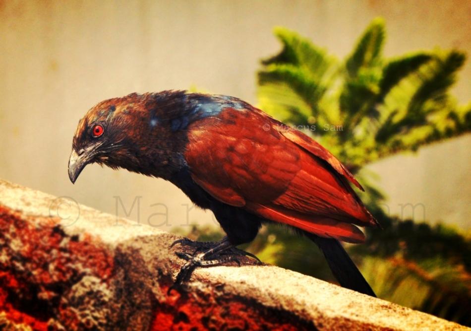 Sceptical Bird