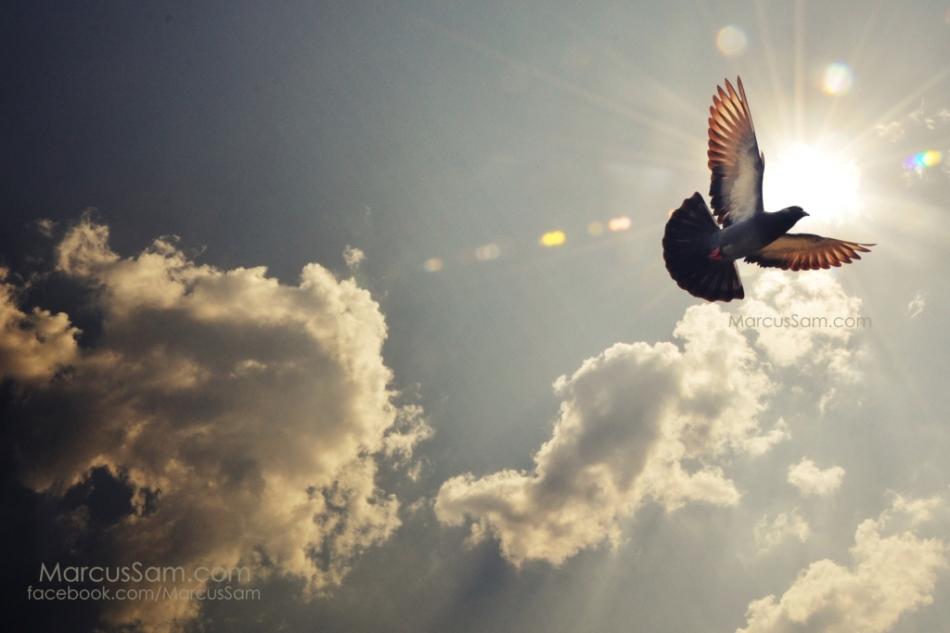 marcussam_freedom