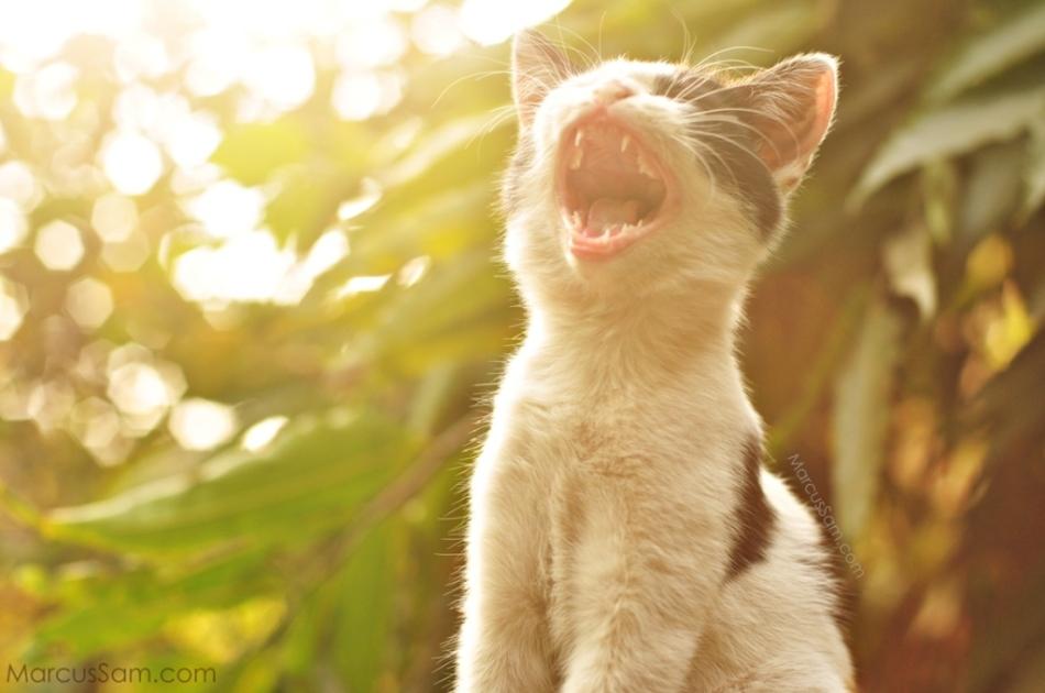 marcussam_cat (2)