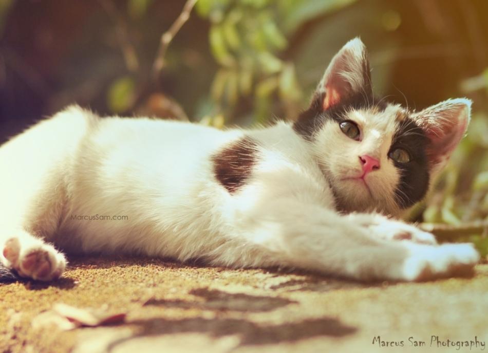marcussam_cat (3)