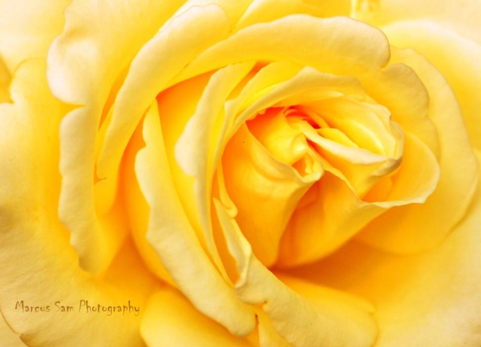 marcussam_flowers (1)