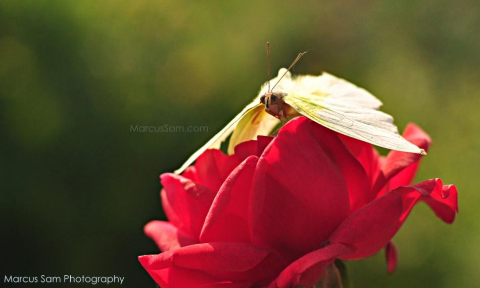 marcussam_flowers (3)