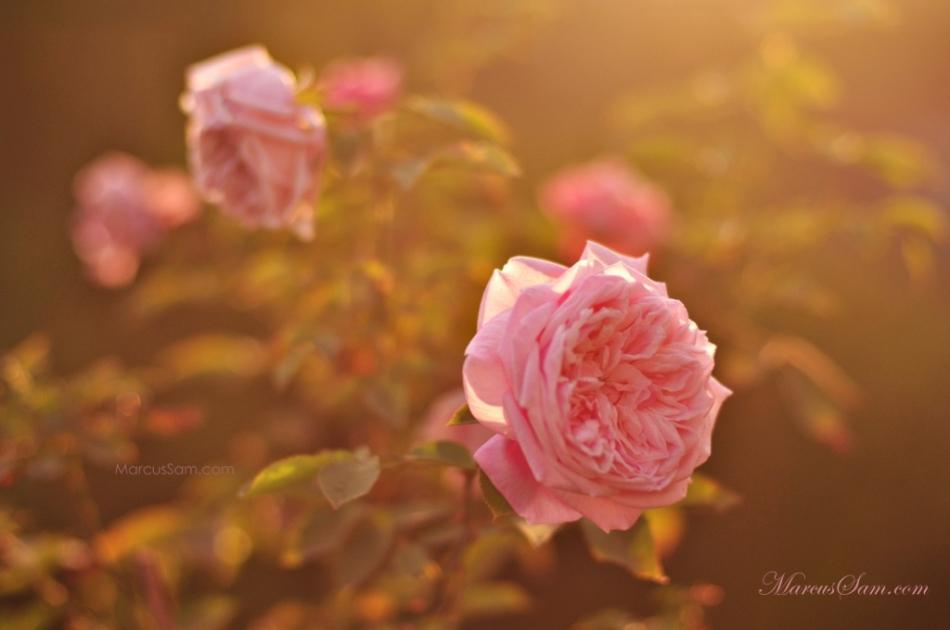 marcussam_flowerseries (1)