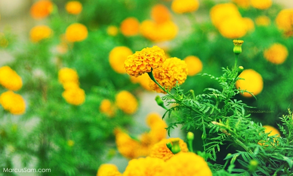 marcussam_flowerseries (2)