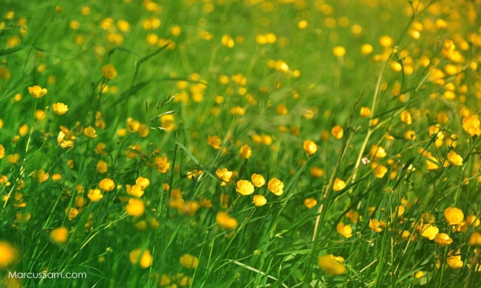 marcussam_flowerseries (4)